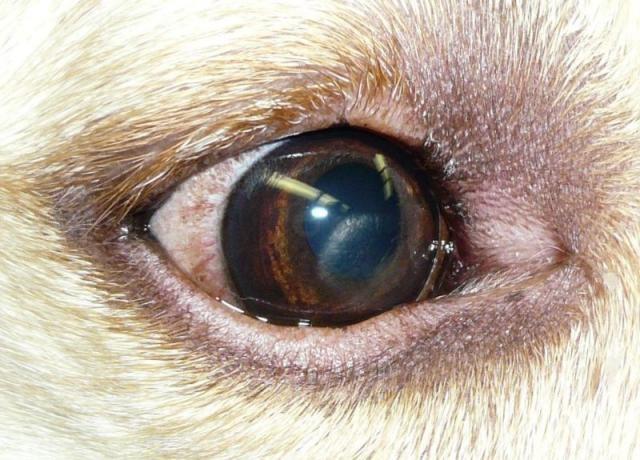 Black Cat Reddened Eyes