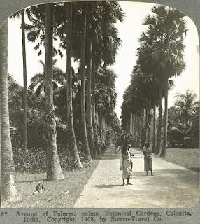 India 100 years ago: Avenue of Palmyra palms, Botanical Gardens - Calcutta (Kolkata), India