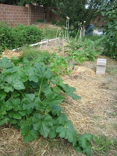 Wide shot with winter squash, a blur that are snap beans, and a  second blob that are the biggest of the eggplants