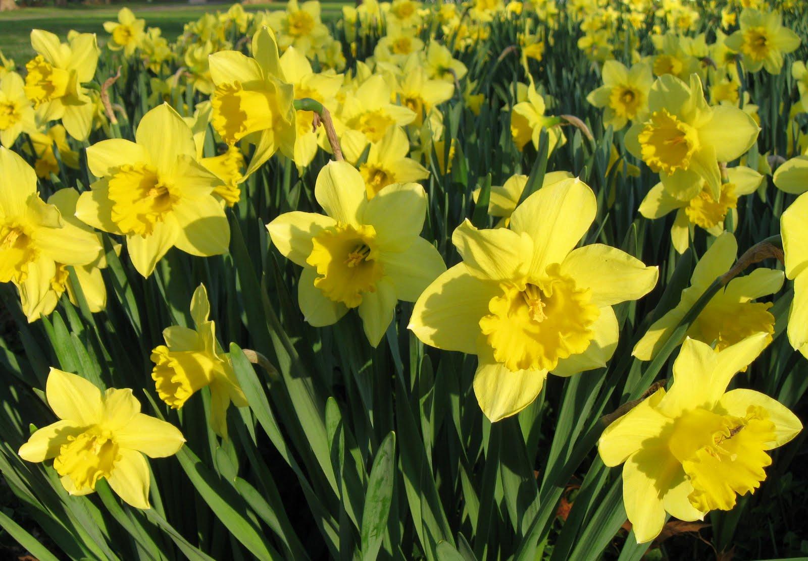 Garden dream proven plants no maintenance garden for No maintenance flowering shrubs