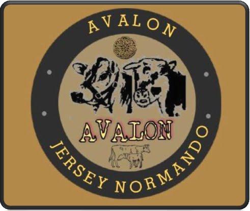 60263e76736 Avalon Jersey - Normando (Colombia)