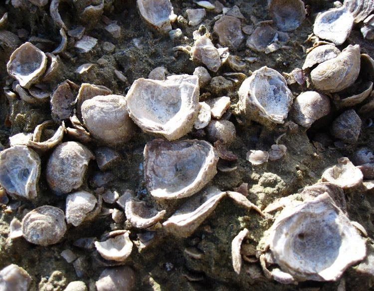 [shells2.jpg]