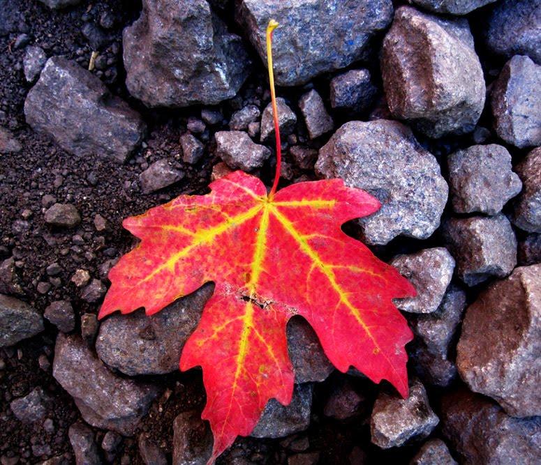 [leaf_s.jpg]