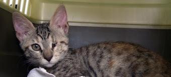 L'articolo di Federica ovvero il gatto del giorno
