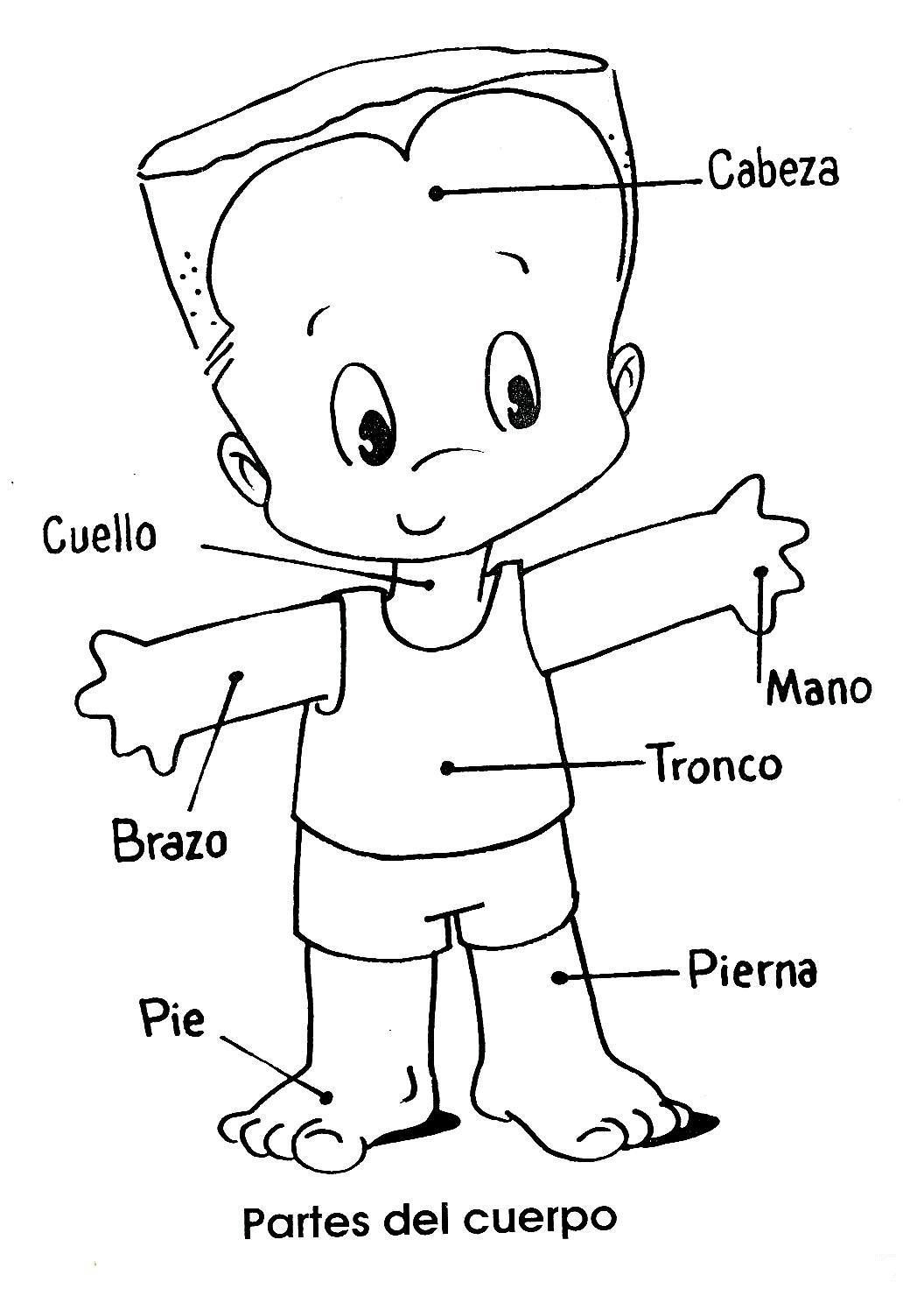 Niño con partes del cuerpo para colorear