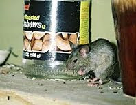 So you are hearing the noises in the middle of the night. Is it rats or mice? Rats are larger and do make louder noise but that is little help if ... & The Pest Advice: What is the Scratching I Hear in My Roof?