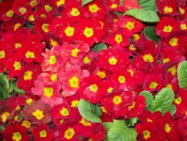 Red Flower Saidai