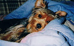 Our beloved Angel 1997-2008