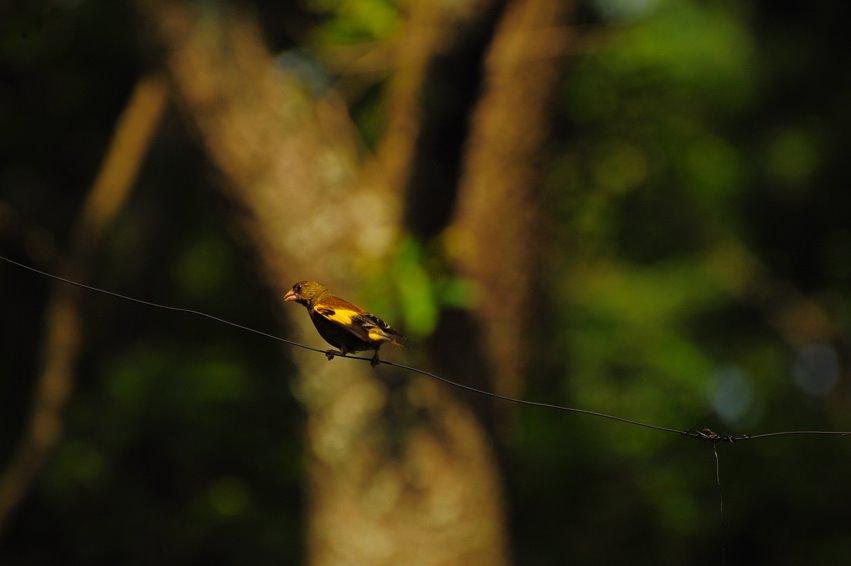 [ガラムの鳥。DSC_0999.jpg]