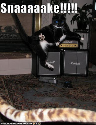 All Pictures Are Taken From The Lol Cat Website So Dont Blame Me If You Like Them Have A Great Weekend And Week