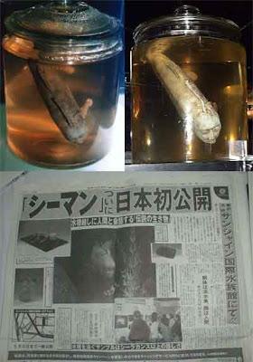 gambar gambar hantu seram: Ikan Berkepala Manusia Sanga