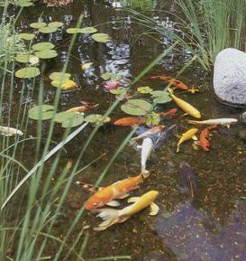 Goleoo - Gambar - gambar kolam ikan