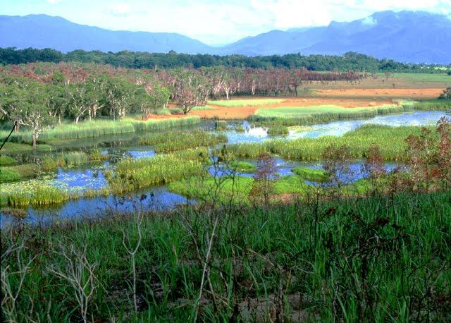 Eubanangee Swamp