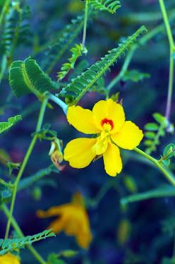 Australian Wildflower #1026