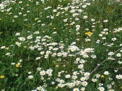 Bodrum'a bahar geldi...