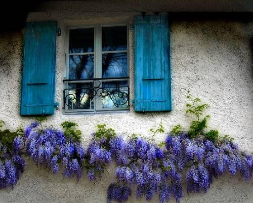 mor salkımlı pencere