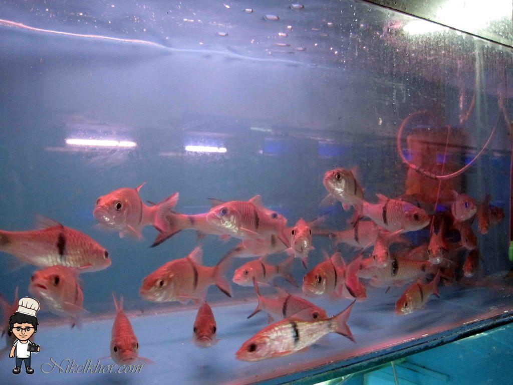 Fish aquarium in johor bahru - Dealer Of Imported Classic Rare Species Live Ornamental Fish Aquarium Accessories Fish Food Decorated Aquarium Tanks Ponds Service To Your Door Step And