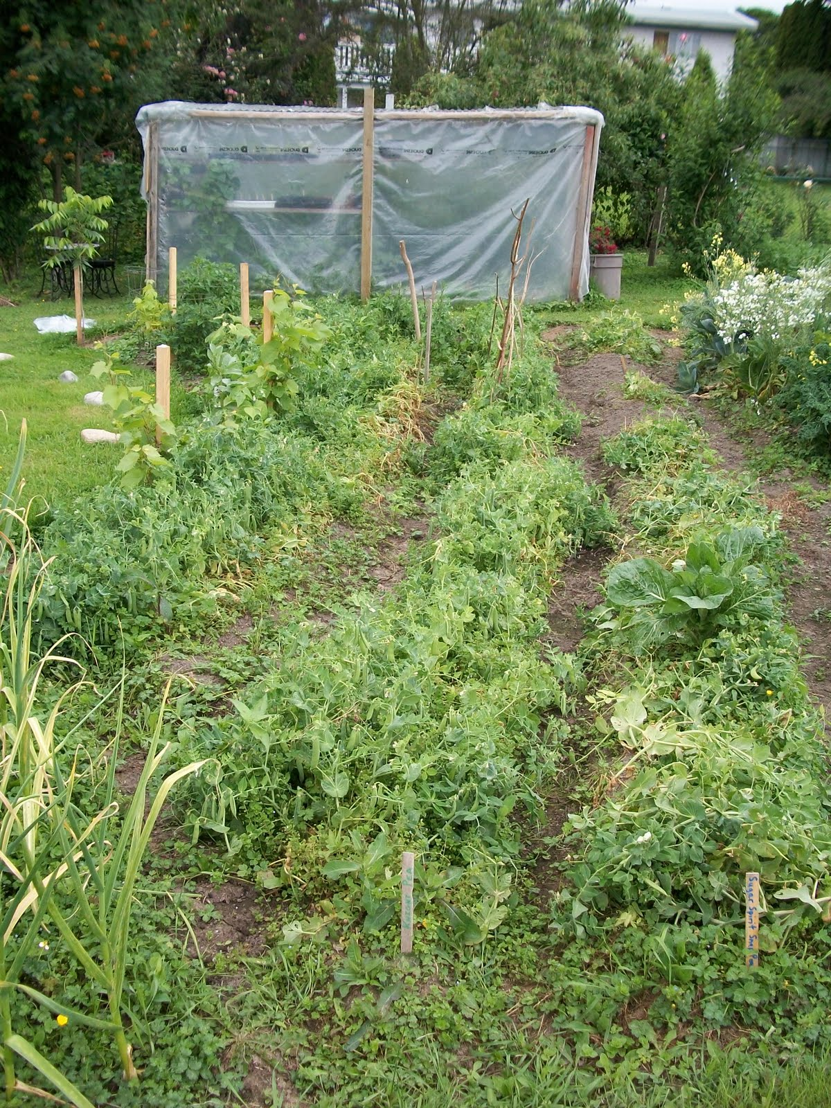 Garden Gabble A Garden Update July 2010
