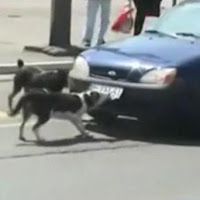 matricula arrancada por perro