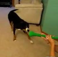 perro vs vuvuzela