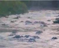 rio plagado de caimanes