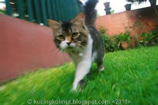 kucing holang, cara menemukan kucing hilang