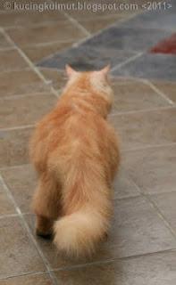 kucing bunting