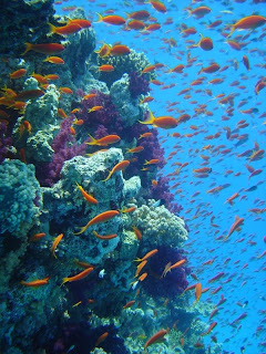 great barrier coral reefs australia