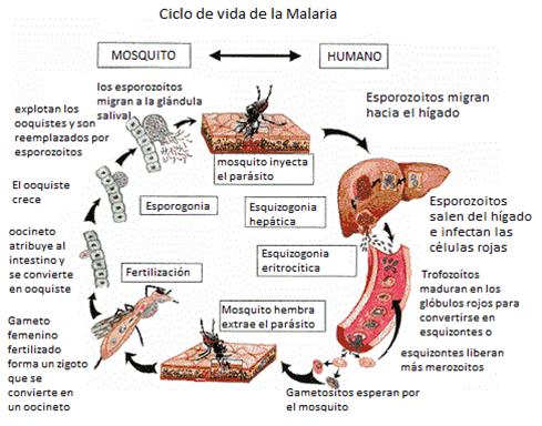 Malaria en Bolivia