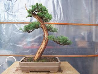 Escuela vivebonsai ense anza del cultivo de bonsais - Cultivo de bonsai ...