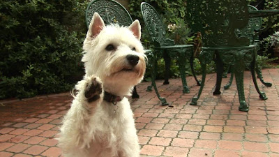 dog hi five