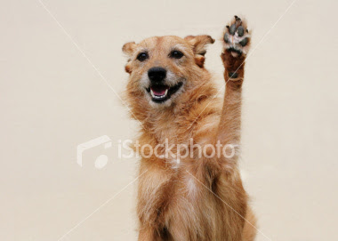 happy dog high five
