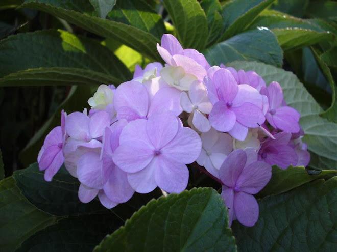 De mi jardín