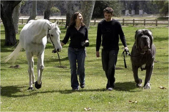 lindos y tiernos cachorritos: Grandes Razas De Perros