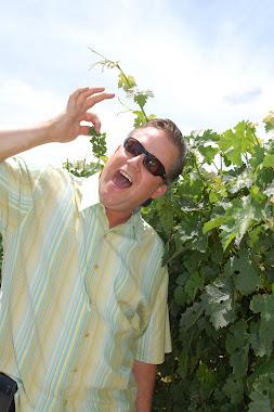 Grapes at Robert Mondavi - Napa