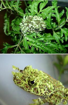 [Image: a96745_Vietnamese-frog1.jpg]