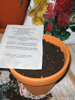 Bag with Stevia seeds on top of clay pot with soil