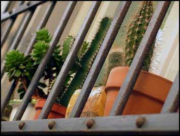 la natura in gabbia