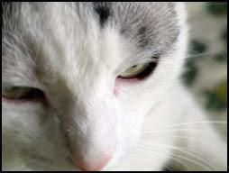 Pà-chat