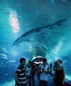 nel tunnel sott'acqua