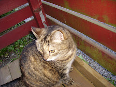 Det här är Tigris, en mycket älskad kattdam, som tyvärr gick bort,
