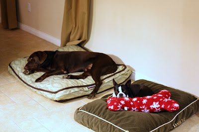 The dogs are tired out and asleep on their beds after a long day.