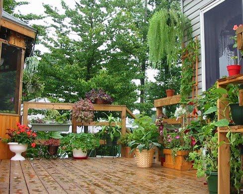 2010 for Amenager une terrasse avec des plantes