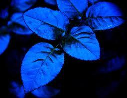 diaforetiko.gr : blue+leaves Κάθε ασθένεια περιέχει ένα κρυφό μήνυμα!