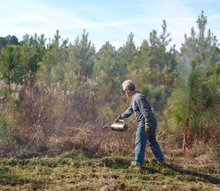 Audubon SC burning Longleaf Pine by Mark Musselman
