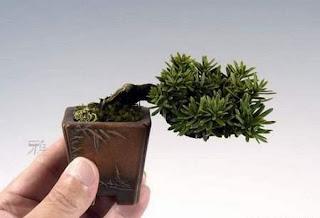 Ideias decoração mobiliário | Mini bonsai nano