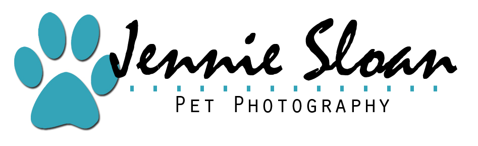 Jennie Sloan Pet Photography