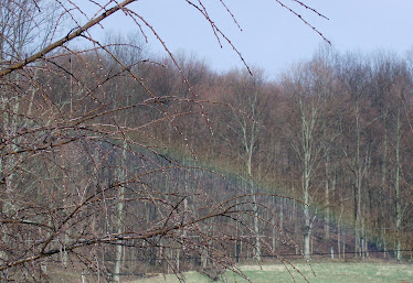 Rainbow over the pasture