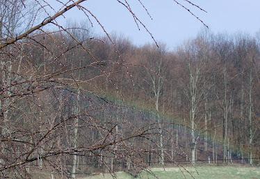 Rainbow over the pasture
