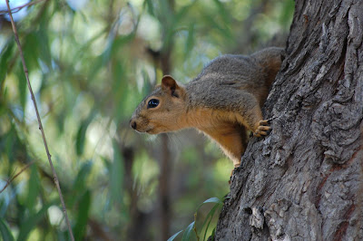 The squirrels love the trees.  They are relatively safe up there.
